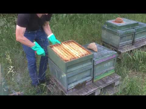 4 Honigzargen Frühtracht Aus Einer Brut-Zarge Zander