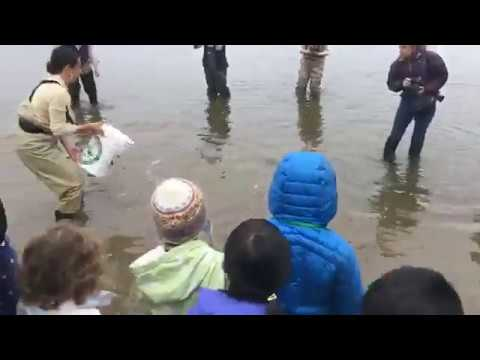 Gov. Charlie Baker and kids stock Jamaica Pond with trout