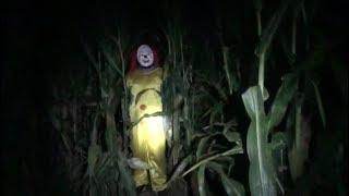 Pure Horror In The Corn