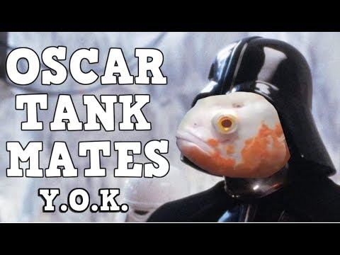 Don't Buy Oscars Without Watching This First. You Oughta Know About Oscar Tank Mates