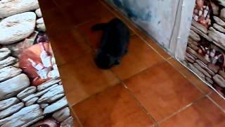 Кота колбасит от оливок