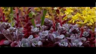 Mahler 5th Symphony, slow movement