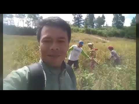 SiruloTV: Rani Pagé (Panen Padi) di Ajinembah - Karo (Bagian 1)