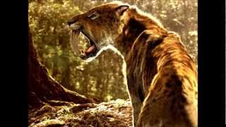 Saber Tooth Tiger (Machairodontinae) - Prehistoric Big Cats.
