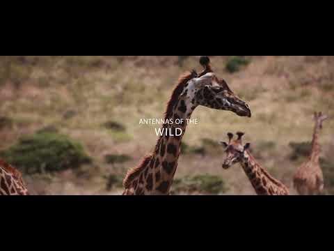 Tanzania unforgettable