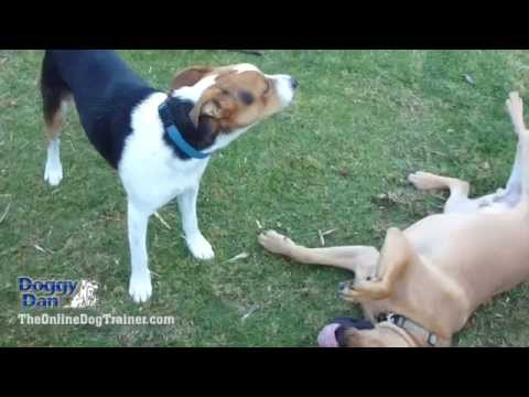 Learning To Understand Your Dog's Body Language