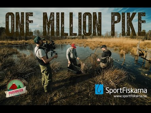 One Million Pike