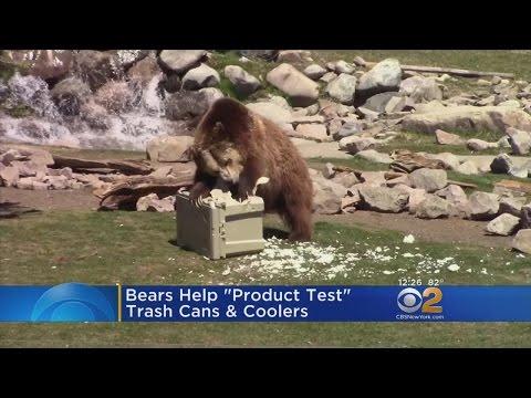 'Bear Testing' At Yellowstone Park