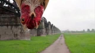 Felichita (про курицу)