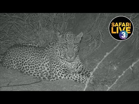 safariLIVE on SABC 3 - Episode 2
