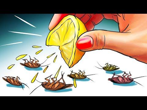 12 Manières Naturelles de se Débarrasser Des Cafards Pour de Bon