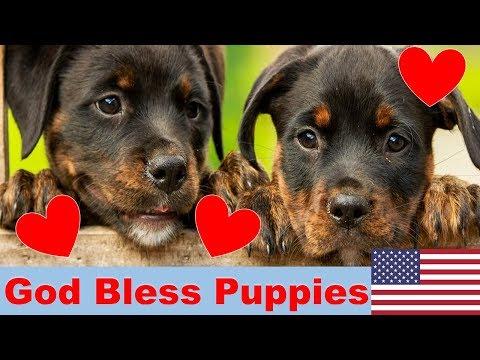 America's Favorite Dog Breeds  PUPPY VERSION