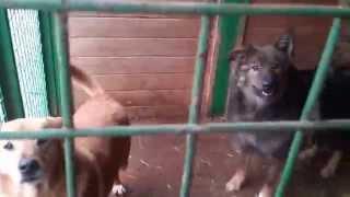 В Приюте для собак