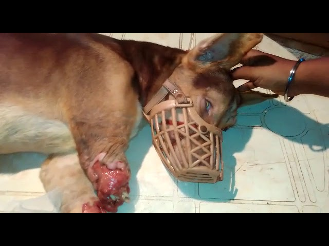 Most critical cases come to PAWS