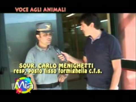 Voce agli animali MIA Corpo forestale dello stato Posto fisso Formighella monte Peglia