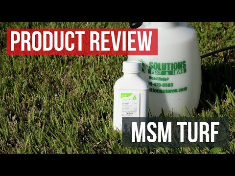 MSM Turf: Product Review