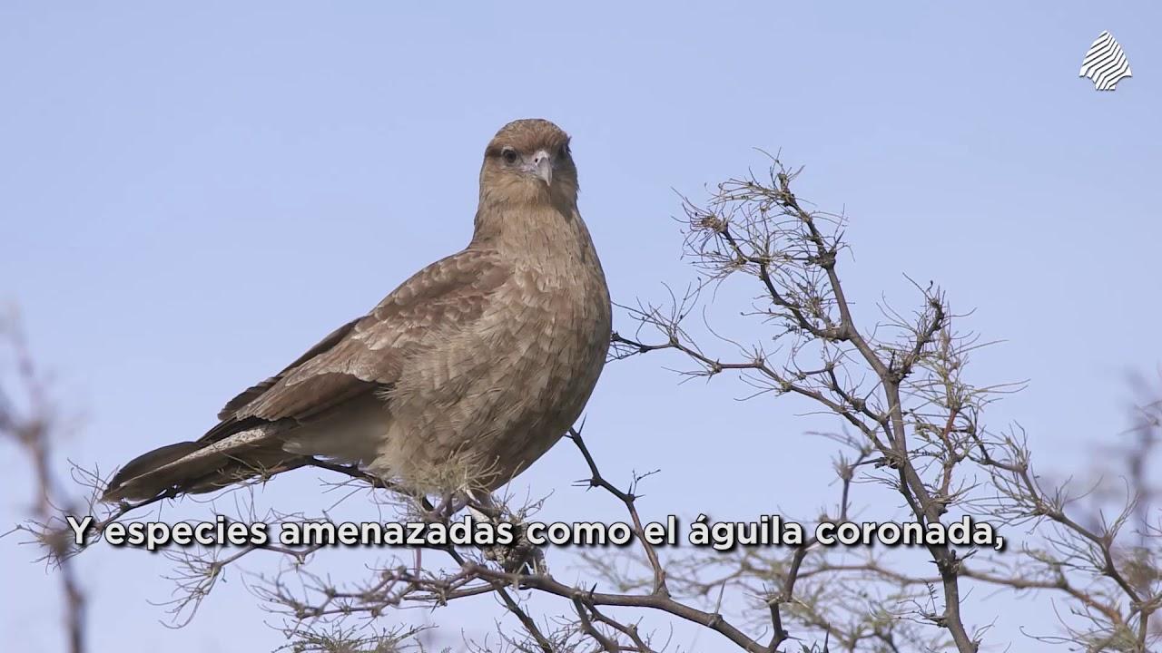 Parque Nacional #LihuéCalel