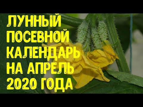 Лунный посевной календарь на апрель 2020 года. Когда посадить огурцы, кабачки, помидоры и капусту? | астропрогноз | агропрогноз | календарь | горяченко | апрель_2020 | посевной | огородни | дачников | гороскоп | лунный