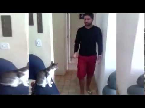Mirá el divertido saludo entre un gato y su dueño