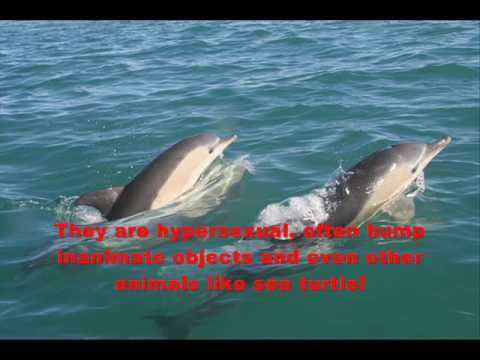 Bizarre Animal Mating Habits! Part 1