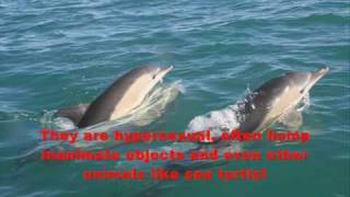 Repeat youtube video Bizarre Animal Mating Habits! Part 1