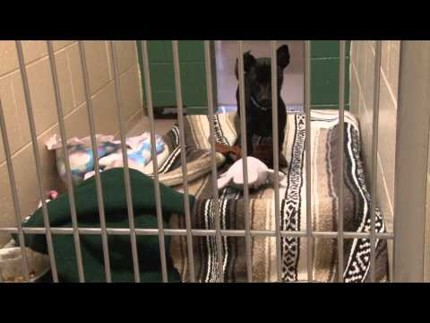 A Day At The Dane County Humane Society Documentary