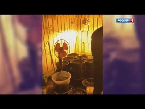 Житель Саратовской области хранил наркотики и огнестрельное оружие