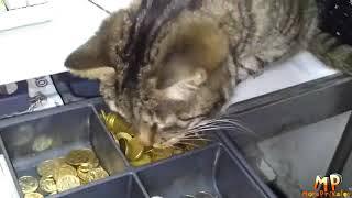 Ну очень смешные приколы с кошками и котятатми