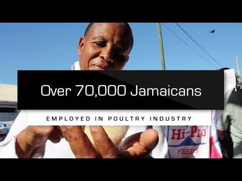 Support Jamaica's Poultry Industry (short version)