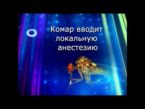 Восхитительные особенности тела комара
