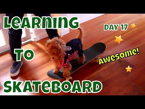Puppy Learning To Skateboard: Star Performance on Day 17 - Learning to Skateboard VOL. 13
