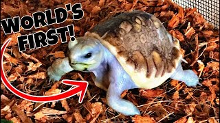 UPDATE ON AVATAR!!!! WORLDS FIRST SCALELESS TORTOISE!!