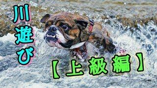 2017年6月18日 新潟県三条市にある五十嵐川で遊んできました。 泳いで流...