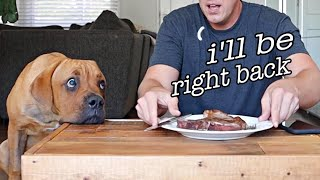 Leaving my blind dog alone with STEAK! (Leave it Challenge)