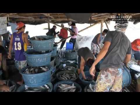Etude de cas : la pisciculture intensive à Anda