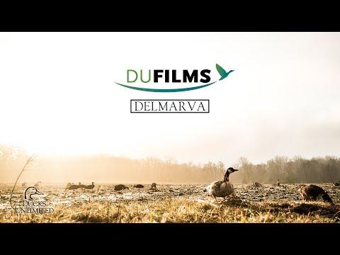 DU Films 2017: Delmarva (Full Film)