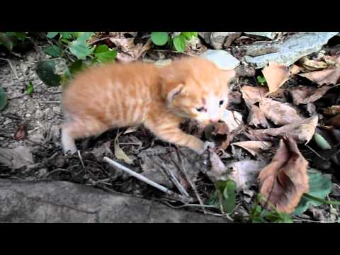 Baby cat really want Mom , 엄마 고양이를 찾는 귀여