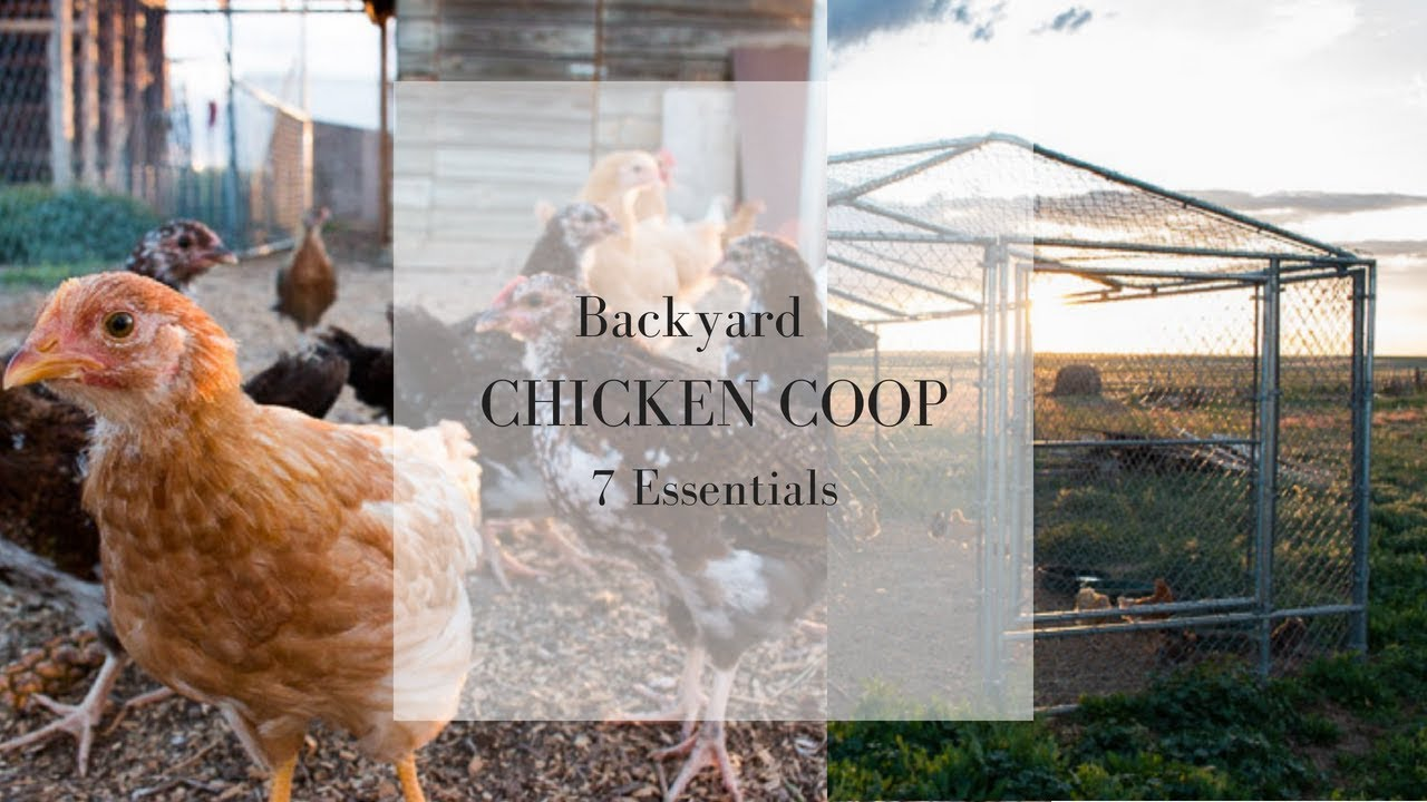 7 Essentials for the Backyard Chicken Coop | Raising ...