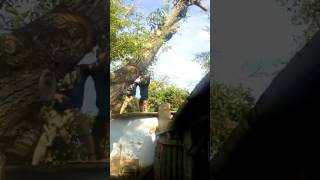 видео Дерево (Дуб) упало на крышу дома #Арборист
