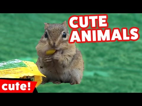 Funniest Pet & Animal Bloopers, Clips & Outtakes Compilation January 2017 | Kyoot Animals