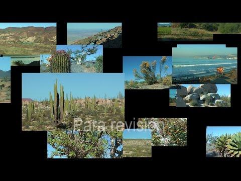 Puerto San Carlos Baja California Sur
