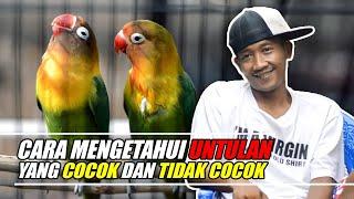 Download lagu CARA MENGETAHUI UNTULAN YANG COCOK ATAU TIDAK COCOK
