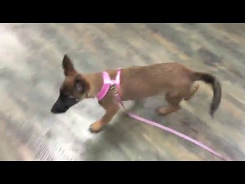 Puppy Training Tips!  Play Engagement Games When You Are In Public | Oceanside Dog Training