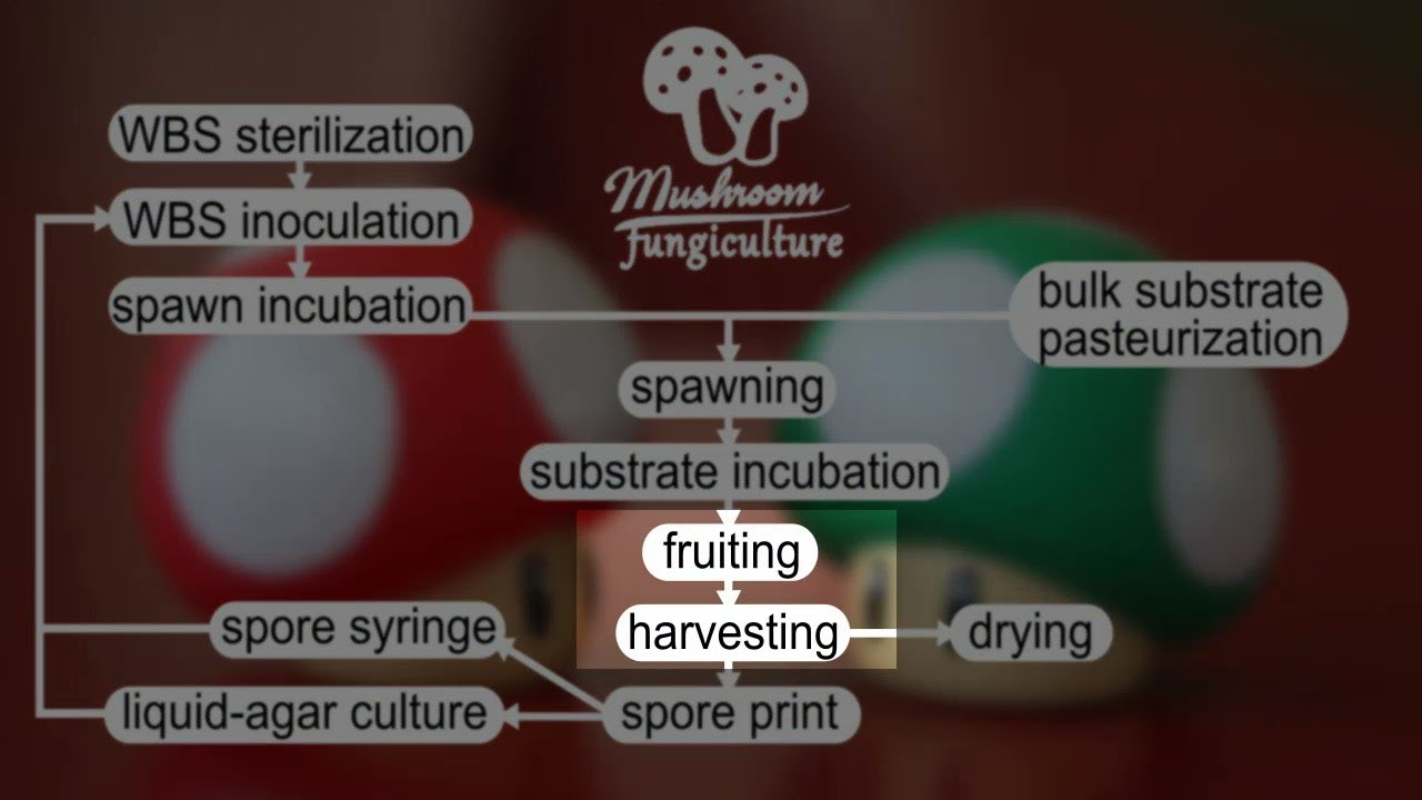 (5) How to grow your own mushrooms: pinning-fruiting-harvest tutorial