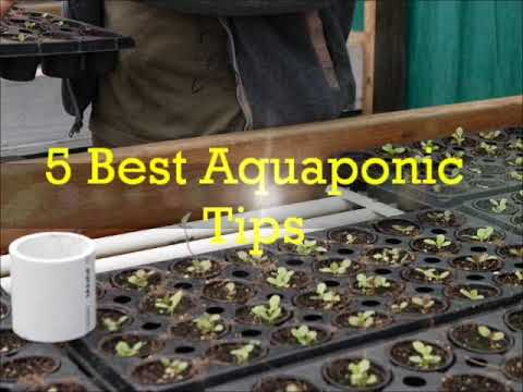 Commercial aquaponics systems for sale aquaponics 4 you for Aquaponics systems for sale