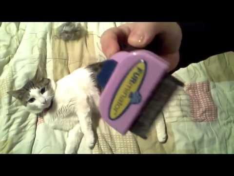Как и чем помыть кота в домашних условиях? Как часто можно