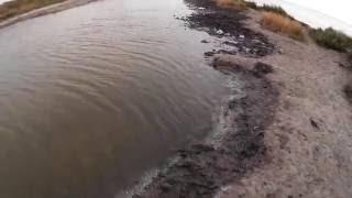 Мерзкие твари в залежах сероводородных грязей  Хорлы  Херсонская область  Украина