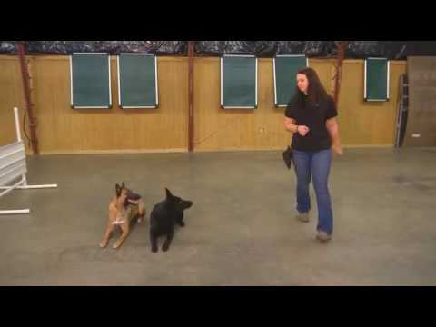 "Dynamic Duo Super Dogs ""Ken & Allie"" Tandem Obedience & Tricks Personal Protection Dogs"