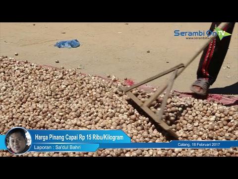 Harga Pinang Kering di Aceh Jaya Capai Rp 15 Ribu