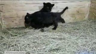 В частном доме Новороссийска незаконно содержали экзотических животных.
